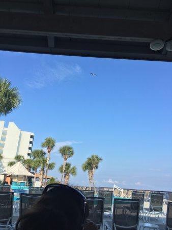 Sandestin, FL: photo2.jpg