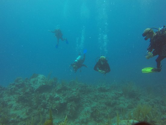 Blue Experience Diving: Tim (yellow fins) leading the way
