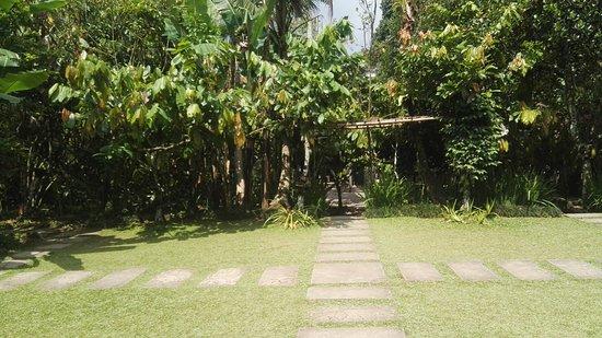 Penebel, Indonesia: IMG_20170922_140510_large.jpg