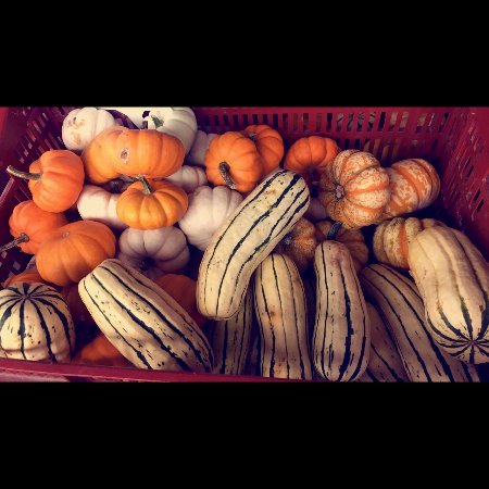 Tamaqua, Пенсильвания: Get ready for fall with some pumpkins and gourds for sale.