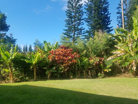Outside Bedroom Window - Picture of The Gardens at West Maui Hotel ...