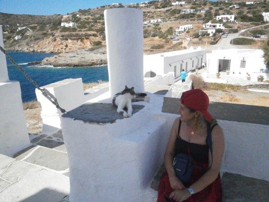 Sifnos, กรีซ: les chats aussi apprécient l'endroit