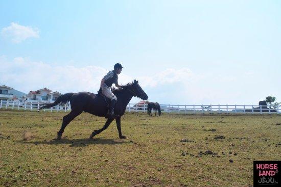 Horseland Jeju