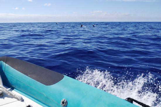H2o Madeira: Dolphins sighted