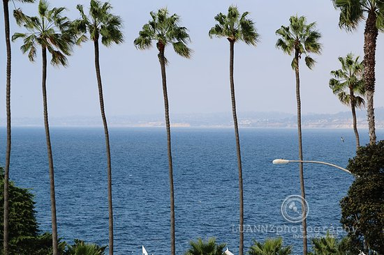 La Jolla Shores Hotel: The view is great from hotel but is best outside