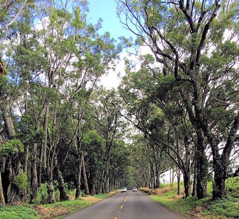 Kalaheo, Havai: Road