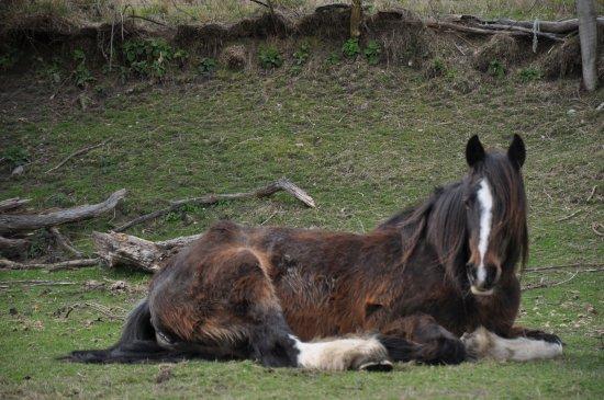 Glenorchy, Nouvelle-Zélande : Nice horse