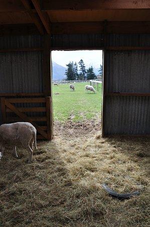 Glenorchy, Nouvelle-Zélande : Inside barn