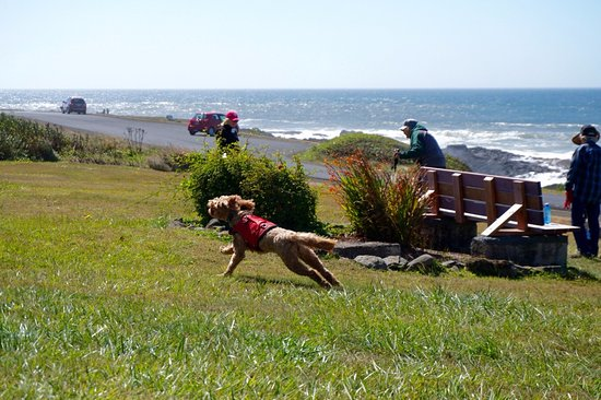 Service Dogs Dreams Come True Thanks to The Yachats Inn