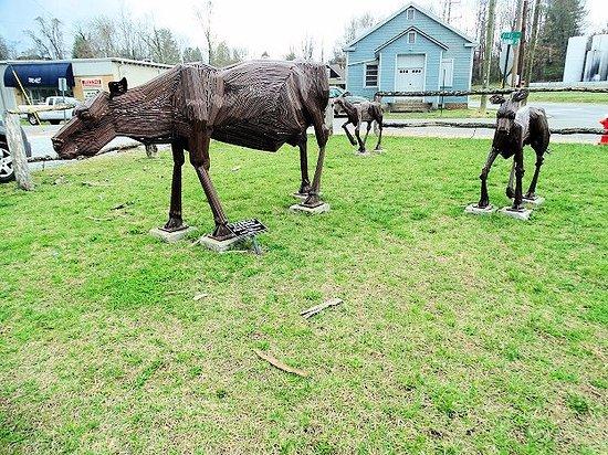 Brevard, NC: cows
