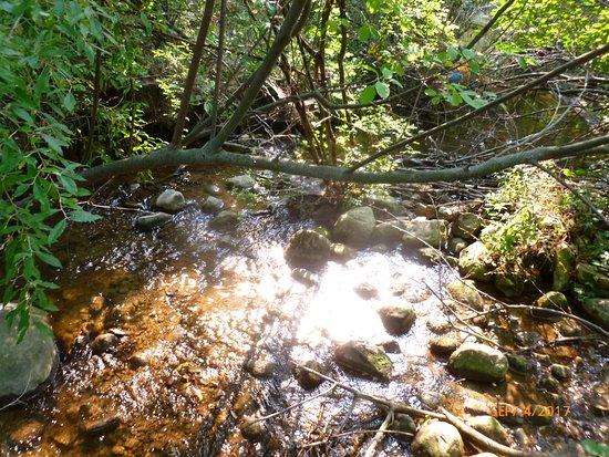 Трой, Мичиган: Head of the Rogue river