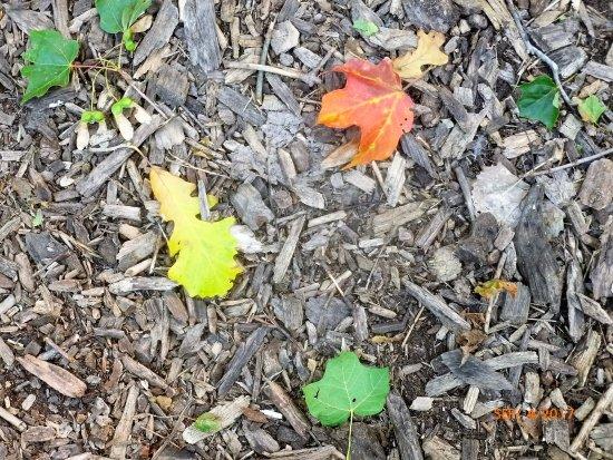 Трой, Мичиган: early fall leaves