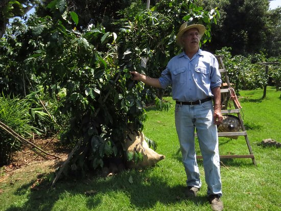 Captain Cook, Hawái: A guide from the farm tells us about coffee