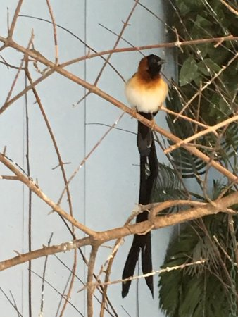 National Aviary: photo5.jpg