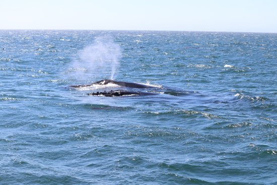 Central Coast Sailing Charters: The whales were just spectacular
