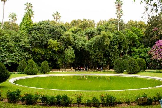 Le grand bassin jardin d 39 essais picture of le jardin d 39 essai du hamma algiers tripadvisor - Grand bassin de jardin ...