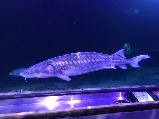 Aquarium of the Bay: photo0.jpg