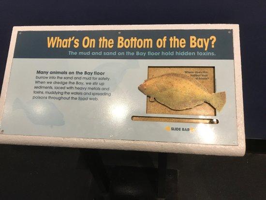 Aquarium of the Bay: photo4.jpg