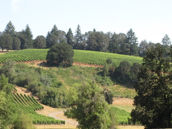 Carlton, OR: Prestine setting of Lazy River Vineyard!