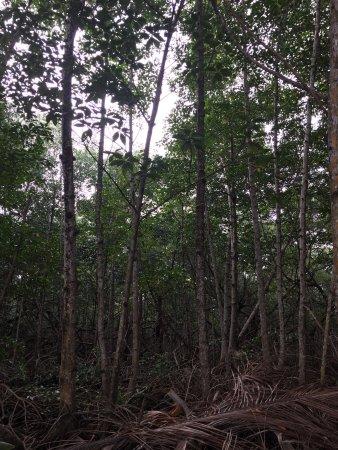 Pueblo de Bocas, Panamá: photo3.jpg
