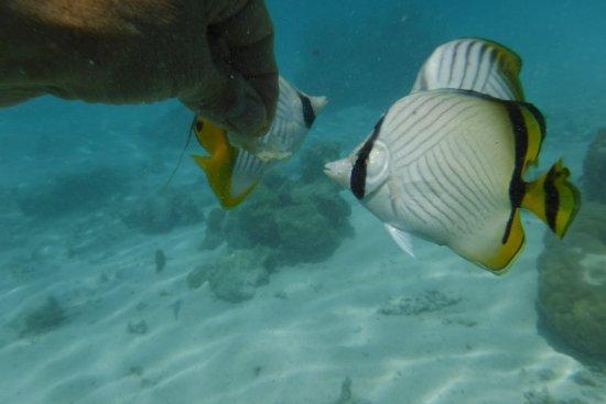 Papetoai, Polinezja Francuska: Snorkeling in protected bay