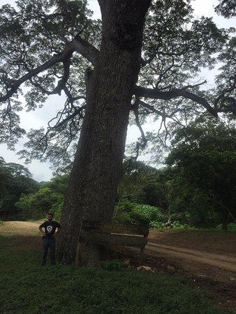 La Cruz, Costa Rica: photo1.jpg