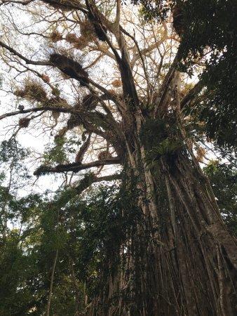 Yungaburra, Australia: September 2017