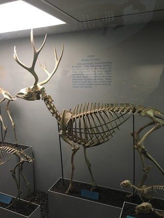 National Museum of Natural History : photo5.jpg