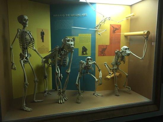 National Museum of Natural History : photo6.jpg
