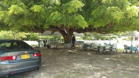Gun Bay, Gran Caimán: Henry communting to work...to Big Tree BBQ