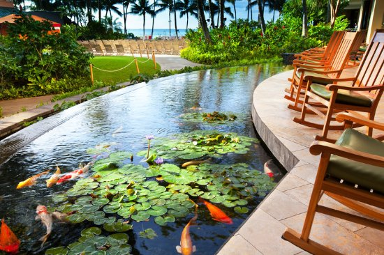 Sheraton waikiki updated 2017 prices resort reviews for Koi pond price