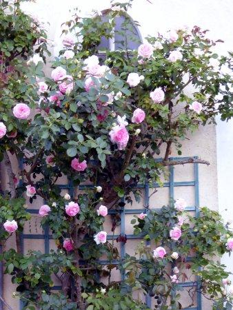 Un très beau jardin et beaucoup de fleurs odorantes au ...