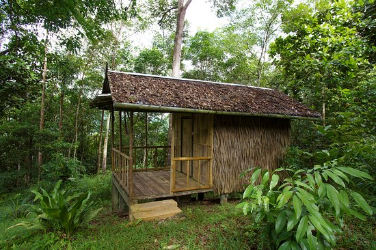 Tamparuli, Malaysia: hangout at our bamboo hut & listen to nature, best for teenagers seeking jungle adventure