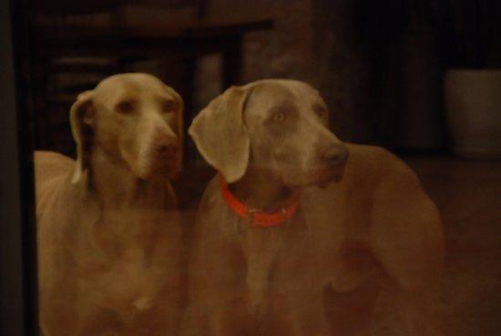 Mezieres-en-Brenne, فرنسا: les chiens d'arrêt