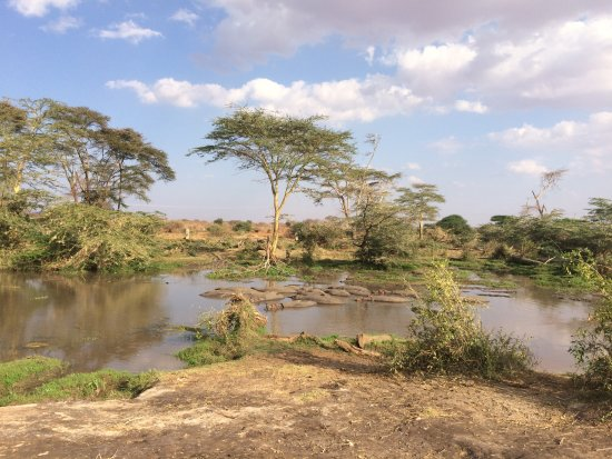Voyager Ziwani, Tsavo West: Photo of hippos taken on a bush walk not far from the hotel