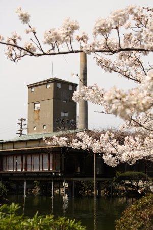 NAKANO.B.C.: 春 桜と蒸留塔