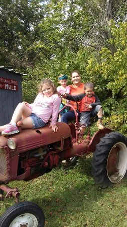Jane's Saddlebag: Come take a pic on our tractor