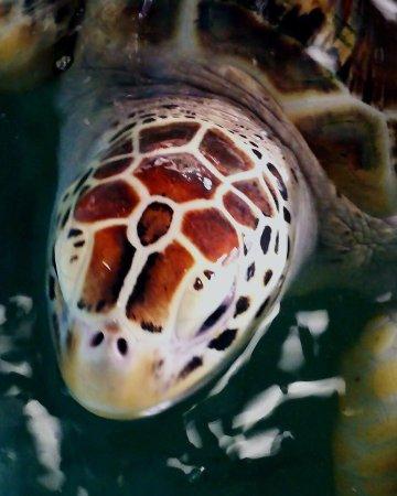 Royal Thai Navy Third Fleet Turtle Nursery (Khao Lak): Top Tips & Facts B...