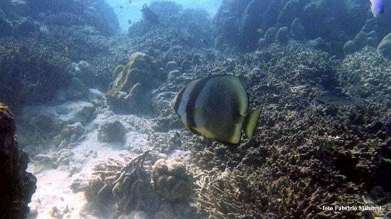 Mahe Island, Seychelles: Un abitatore della baia piuttosto grande