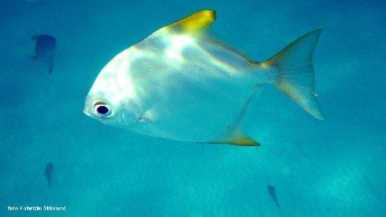 Mahe Island, Seychelles: Un esemplare del banco di pesci presso il battello