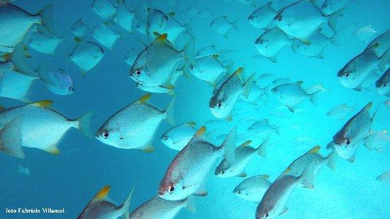 Mahe Island, Seychelles: Il banco di pesci presso il battello