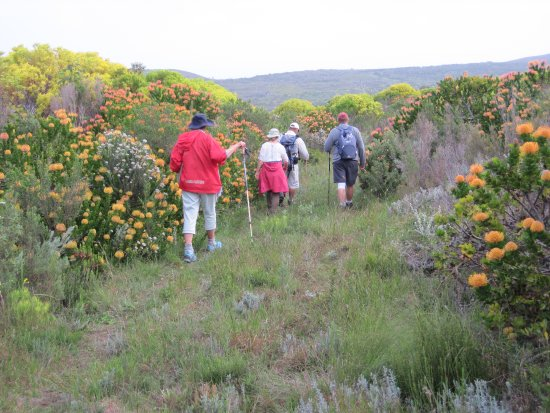 Overberg District, South Africa: Trailing through an avenue of glorious fynbos