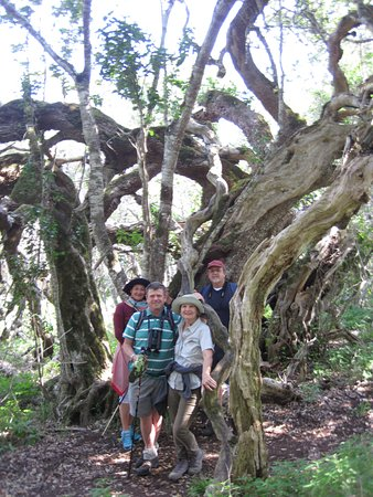 Overberg District, Sudáfrica: A stately White Milkwood with many stories to tell