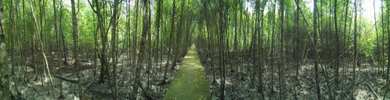 Selangor, Malaysia: Magroves walk way
