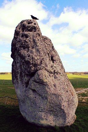 Amesbury, UK: Bird on Stonehenge