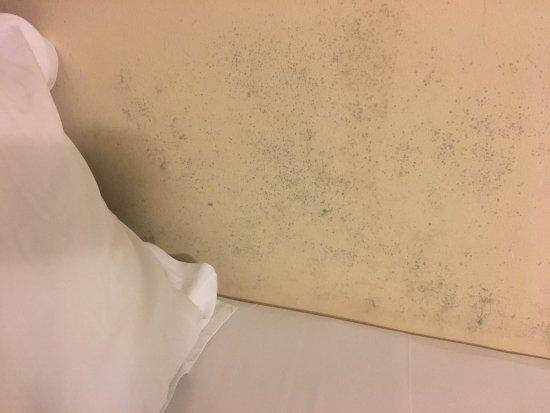 85 Beach Garden Hotel : 房間、走廊空氣非常糟糕,霉味很重,聞起來很不舒服,房間牆壁天花板都發霉,房間空間很小,浴室也到處發霉,四樓房水壓很低,飯店門口在其他房子的後門,所以會經過很多垃圾收集區,冷氣常常出問題,一下子