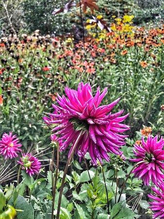 Dunham Massey Hall & Gardens: photo5.jpg
