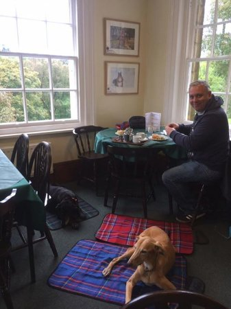 this is the dog friendly cafe at Kielder Castle who serve fabulous scones