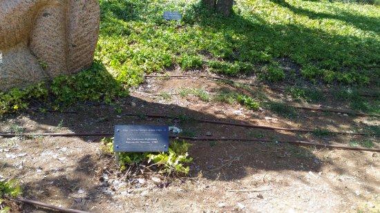 Memorial del Holocausto Yad Vashem: Yad Vashem