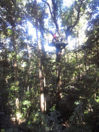 Cape Tribulation, Australia: one of platforms in the canopy